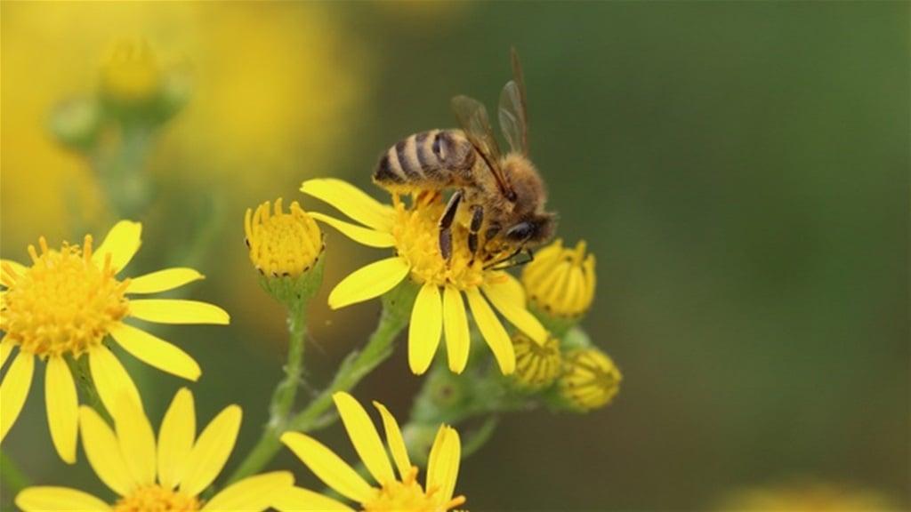 Županija raspisala natječaj za potporu za očuvanje pčelinjeg fonda