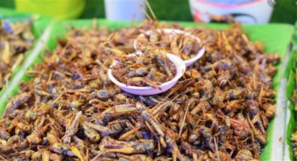 Odobren prvi kukac za hranu u EU